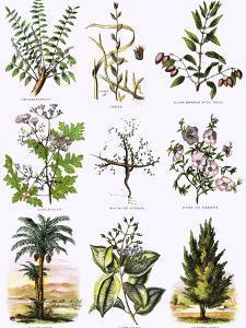Biblical Natural History by English