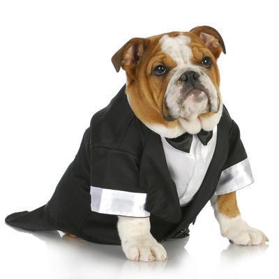 https://imgc.artprintimages.com/img/print/english-bulldog-wearing-black-tuxedo-and-tails-on-white-background_u-l-q10349o0.jpg?p=0