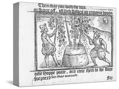 Hop Cultivation, from 'Vade Mecum, a Perfite Platform of a Hoppe Garden' by Reynolde Scot, 1576