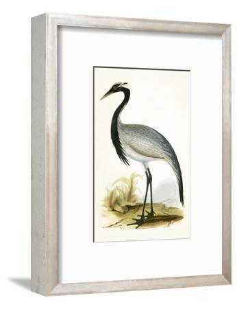 Numidian Crane,  from 'A History of the Birds of Europe Not Observed in the British Isles'