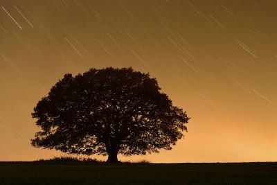 English Oak Tree (Quercus Robur) Silhouetted Against Orange Sky with Star Trails-Solvin Zankl-Photographic Print