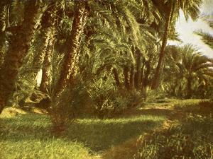 A palm grove on Elephantine Island, Egypt by English Photographer