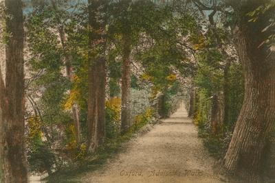 Addison's Walk, Oxford. Postcard Sent in 1913