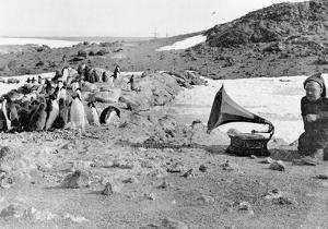 Penguins Listening to the Gramophone During Shackleton's 1907-09 Antarctic Expedition, from 'The… by English Photographer
