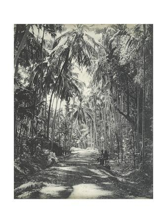 Road Near Colombo, Ceylon, February 1912