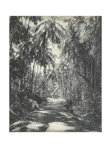Road Near Colombo, Ceylon, February 1912 by English Photographer