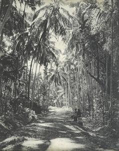 Road Near Colombo, Ceylon, February 1912 by English Photographer