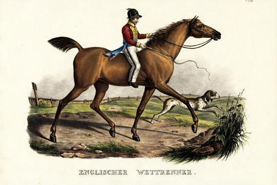 English Racer Horse, 1824-Karl Joseph Brodtmann-Giclee Print