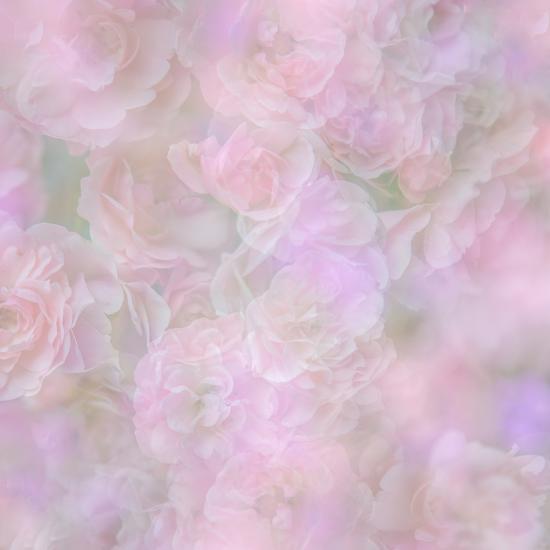 English Rose II-Doug Chinnery-Photographic Print