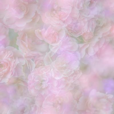 https://imgc.artprintimages.com/img/print/english-rose-ii_u-l-q12zbnr0.jpg?p=0