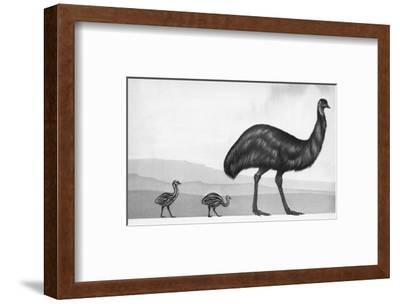 An Emu with Her Chicks