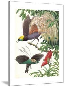 Birds of Paradise by English School
