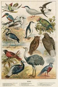 Birds by English School