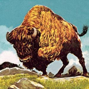 Bison by English School