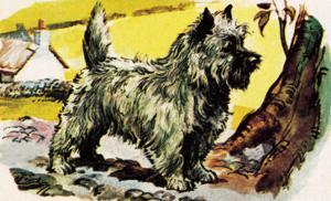 Cairn Terrier by English School