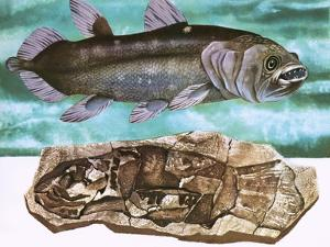 Coelacanth and its Fossil by English School