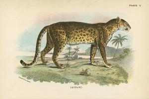 Leopard by English School