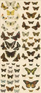 Our British Butterflies by English School