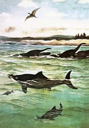 Pre-Historic Sea Creatures