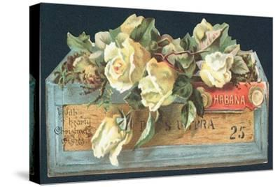 Roses in Cigar Box, Christmas Card