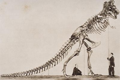 Skeleton of the Tyrannosaurus Rex, in the American Museum of Natural Histor