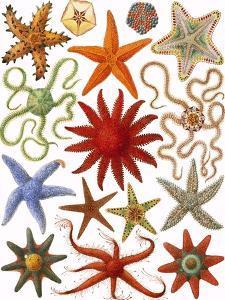Starfish by English School