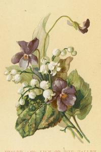Violet and Lily of the Valley by English School
