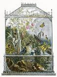 The Butterfly Vivarium-English-Premium Giclee Print