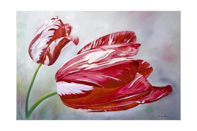 https://imgc.artprintimages.com/img/print/english-tulips_u-l-pymhui0.jpg?p=0