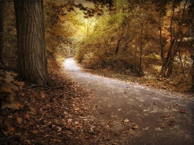 Enlightened Path-Jessica Jenney-Giclee Print