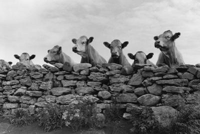 Over Herd by Enrico Straub