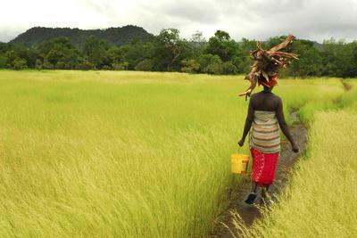 Bassari Woman Carrying Firewood on Her Head. Bassari Country, East Senegal