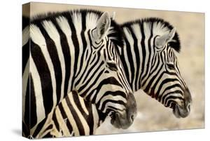 Burchell'S Zebras (Equus Quagga Burchellii) Standing Side By Side. Etosha Np, Namibia by Enrique Lopez-Tapia