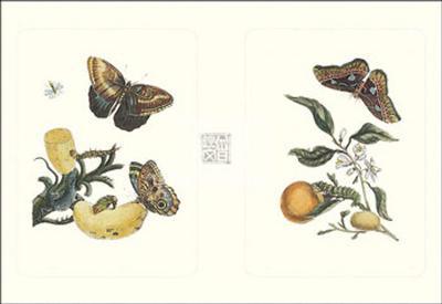 Entomology II--Art Print