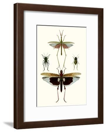 Entomology Series VI-0 Blanchard-Framed Art Print