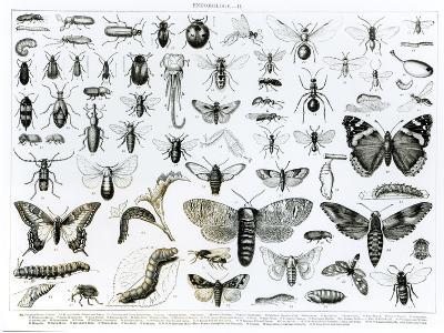 Entomology--Giclee Print