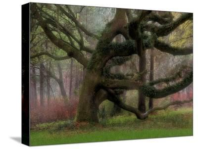 Entwined in the Mist-Judy Griffin-Stretched Canvas Print