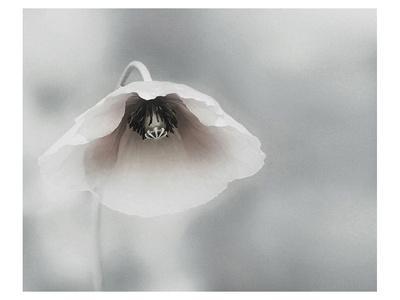 https://imgc.artprintimages.com/img/print/ephemeral-beauty_u-l-f9brm50.jpg?p=0