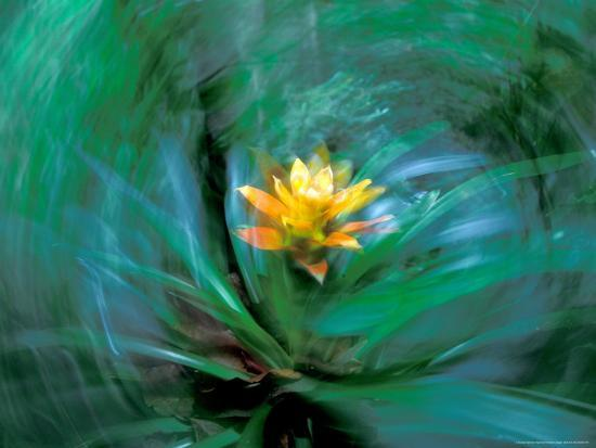 Epiphyte, Barro Colorado Island, Panama-Christian Ziegler-Photographic Print