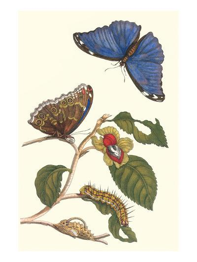 Epiphytic Climbing Plant with a Peleides Blue Morpho Butterfly and a Gulf Fritillary-Maria Sibylla Merian-Art Print