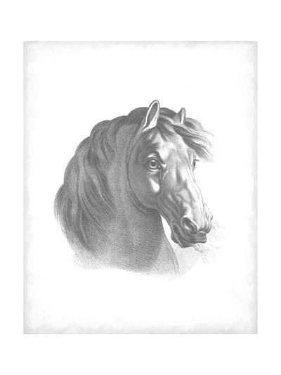 Equestrian Blueprint II-Vision Studio-Art Print