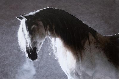 Equine Elegance--Hand Embellished Art