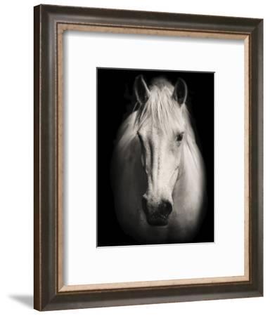 Equus 1-THE Studio-Framed Giclee Print