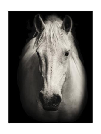 https://imgc.artprintimages.com/img/print/equus-1_u-l-q1g0td30.jpg?p=0