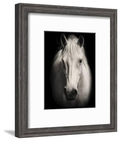 Equus 1-THE Studio-Framed Art Print