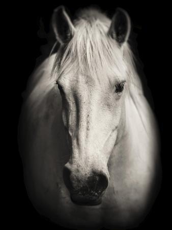 Equus 1-THE Studio-Premium Giclee Print