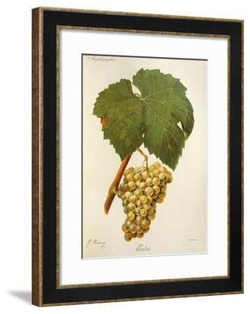 Erdei Grape-J. Troncy-Framed Giclee Print