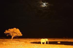 African Elephant (Loxodonta Africana) and Black Rhinoceros (Diceros Bicornis) Bathing by Eric Baccega