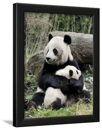 Giant Panda, Mother and Baby
