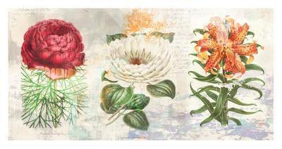 Hortus Botanicus 2.0